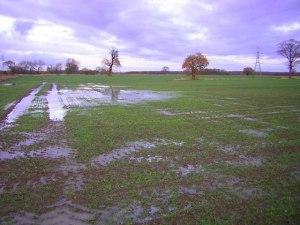 Wet_farmland_
